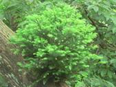 2006-04-23 東眼山森林遊樂區:P1000387