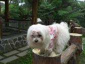 2006-04-23 東眼山森林遊樂區:P1000361