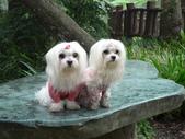 2006-04-23 東眼山森林遊樂區:P1000385