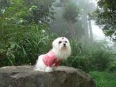 2006-04-23 東眼山森林遊樂區:P1000355