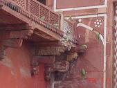 印度金三角之旅:印度 942.jpg