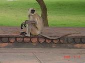 印度金三角之旅:印度 931.jpg