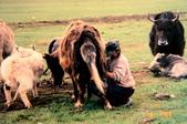 19990729 新疆北疆行13天:14.巴音布魯克天鵝湖 (8).jpg