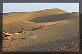 20081011  南彊大漠帕米爾/塔克拉瑪干大沙漠/輪台-塔中-民豐:6.塔克拉瑪干大沙漠 (64).jpg