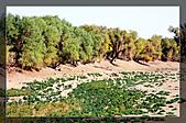 20081011  南彊大漠帕米爾/塔克拉瑪干大沙漠/輪台-塔中-民豐:3.輪台胡楊林公園 (58).jpg