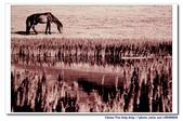 19990729 新疆北疆行13天:17.賽里木湖 (7).jpg