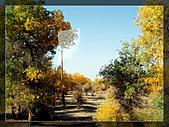20081011  南彊大漠帕米爾/塔克拉瑪干大沙漠/輪台-塔中-民豐:3.輪台胡楊林公園 (1).jpg