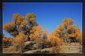 20081011  南彊大漠帕米爾/塔克拉瑪干大沙漠/輪台-塔中-民豐:3.輪台胡楊林公園 (3).jpg