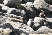 20121023 紐西蘭南島米佛峽灣國家公園:20.121023 米佛峽灣國家公園 (64).jpg