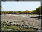 20081011  南彊大漠帕米爾/塔克拉瑪干大沙漠/輪台-塔中-民豐:3.輪台胡楊林公園 (60).JPG