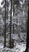 20160124  新北市三峽區逐鹿山追雪記:三峽熊空 (60).jpg