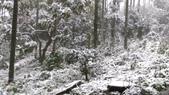 20160124  新北市三峽區逐鹿山追雪記:三峽熊空 (58).jpg