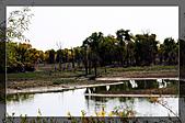 20081011  南彊大漠帕米爾/塔克拉瑪干大沙漠/輪台-塔中-民豐:3.輪台胡楊林公園 (81).jpg