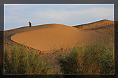 20081011  南彊大漠帕米爾/塔克拉瑪干大沙漠/輪台-塔中-民豐:6.塔克拉瑪干大沙漠 (66).jpg