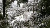20160124  新北市三峽區逐鹿山追雪記:三峽熊空 (204).jpg