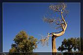 20081011  南彊大漠帕米爾/塔克拉瑪干大沙漠/輪台-塔中-民豐:3.輪台胡楊林公園 (20).jpg
