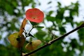 20120518 台東鹿野龍田村的小葉欖仁綠色:2.花蓮欣綠農園午餐.jpg