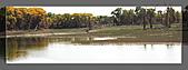 20081011  南彊大漠帕米爾/塔克拉瑪干大沙漠/輪台-塔中-民豐:3.輪台胡楊林公園 (86).jpg