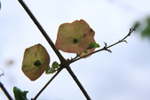 20120518 台東鹿野龍田村的小葉欖仁綠色:2.花蓮欣綠農園午餐 (1).jpg