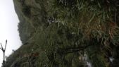 20190105    新北市阿里磅瀑布:IMAG6097.jpg