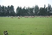 20121025  艾須柏頓kiwi 農家體驗:30.121025 艾須柏頓kiwi 農家體驗 (24).jpg