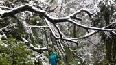 20160124  新北市三峽區逐鹿山追雪記:三峽熊空 (208).jpg