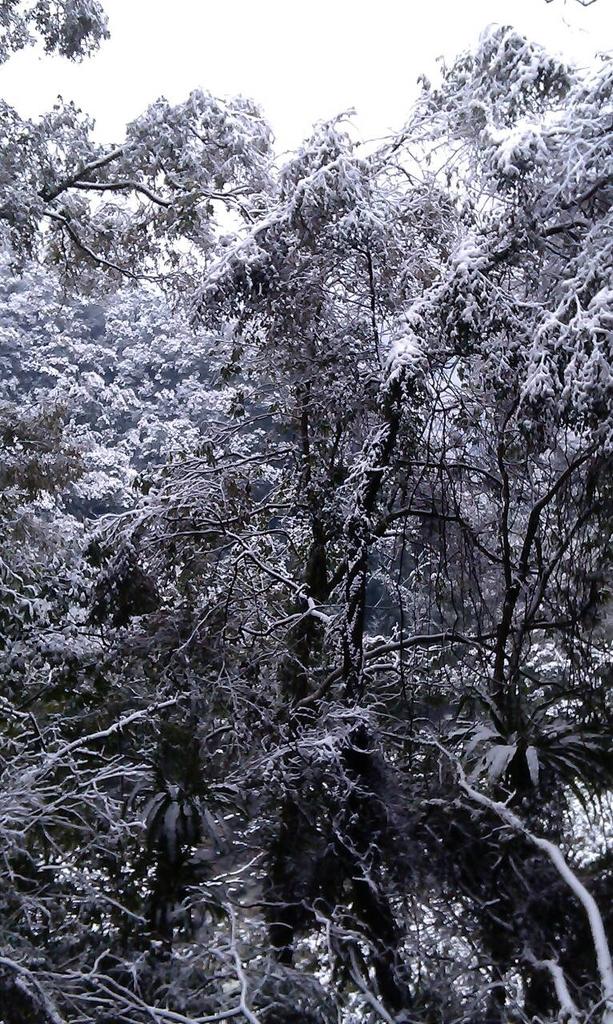 20160124  新北市三峽區逐鹿山追雪記:三峽熊空 (17).jpg