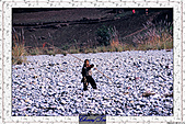 20021115水淹長江三峽最後行腳:70巫山小三峽 (61).JPG