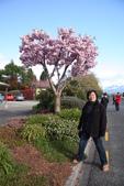 20121023 紐西蘭南島第一大湖—第阿納湖小鎮:18.121023 南島第一大湖—第阿納湖小鎮 (27).jpg