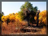 20081011  南彊大漠帕米爾/塔克拉瑪干大沙漠/輪台-塔中-民豐:3.輪台胡楊林公園 (27).jpg