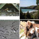 20121025 但尼丁奧塔哥半島上的黃眼企鵝保護區:相簿封面