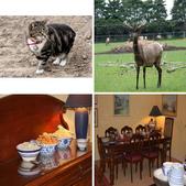 20121025  艾須柏頓kiwi 農家體驗:相簿封面