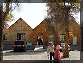 20081011  南彊大漠帕米爾/塔克拉瑪干大沙漠/輪台-塔中-民豐:3.輪台胡楊林公園 (31).JPG