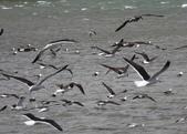 20121025 但尼丁奧塔哥半島上的黃眼企鵝保護區:27.121025 黃眼企鵝保護區 (10).jpg
