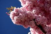 20121023 第阿納湖國家公園/螢火蟲洞之旅:22.121023 第阿納湖之旅 (2).JPG