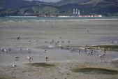 20121025 但尼丁奧塔哥半島上的黃眼企鵝保護區:27.121025 黃眼企鵝保護區 (11).jpg