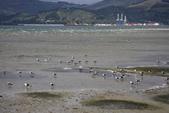 20121025 但尼丁奧塔哥半島上的黃眼企鵝保護區:27.121025 黃眼企鵝保護區 (12).jpg