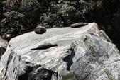 20121023 紐西蘭南島米佛峽灣國家公園:20.121023 米佛峽灣國家公園 (62).jpg