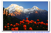 20091030  尼泊爾 安娜普娜山脈健行第三天:30尼泊爾 波拉卡安娜普娜山脈健行3 (57).jpg