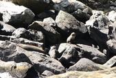 20121023 紐西蘭南島米佛峽灣國家公園:20.121023 米佛峽灣國家公園 (63).jpg