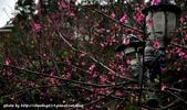 2016春暖花開:觀音山賞櫻-18.JPG