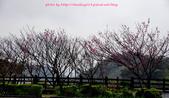 2016春暖花開:觀音山賞櫻-1.JPG