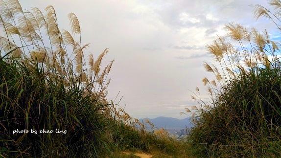 2016秋之豔:三角埔頂山-46.jpg