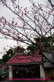 2016春暖花開:觀音山賞櫻-9.JPG