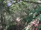 平溪平湖遊樂區上西支線豋番子坑山來回行~108.12.26~1356:IMG_2269.JPG