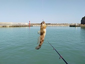 金山磺港漁港釣魚趣~110.02.01~1588:8.jpg