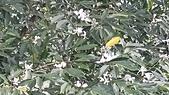 南港桂花步道下桂花吊橋過茶博館上深按頭山O行~110.02.02~1589:3.jpg
