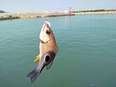 金山磺港漁港釣魚趣~110.02.01~1588:12-1.jpg