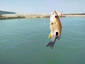 金山磺港漁港釣魚趣~110.02.01~1588:14.jpg