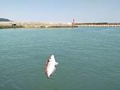 金山磺港漁港釣魚趣~110.02.01~1588:3.jpg